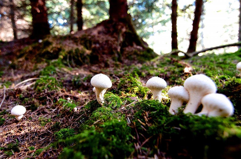 Mushrooms #3
