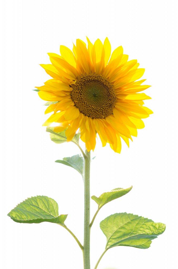 Shine like the Sun